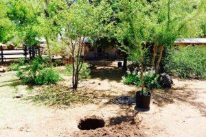 Tree Planting - 2